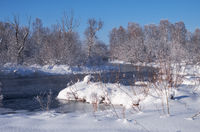 River Koksha surrounded by trees under hoarfrost and snow in Altai region in winter season