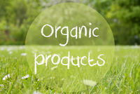 Gras Meadow, Daisy Flowers, Text Organic Products