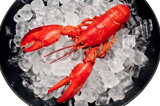 Lobster on ice