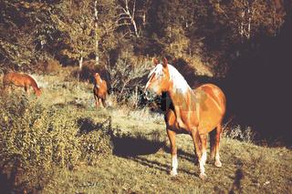 Ein Pferd mit blonder Mähne steht im Herbst auf einer Wiese.