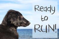 Dog At Ocean, Text Ready To Run