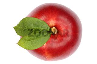 Nektarine Frucht von oben Freisteller freigestellt isoliert