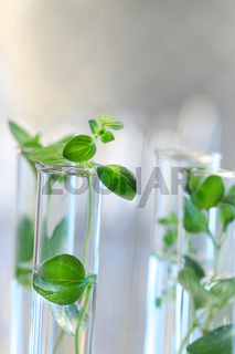 Test Tubes with small plants
