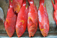 Redsnapper fish at Seychelles market