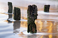 groynes in the wadden sea, Blankenberge, Flanders, Belgium
