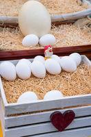 basket of fresh white farm eggs