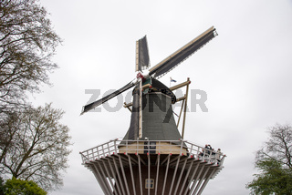 Traditional Dutch windmills with vibrant tulips, The Netherlands