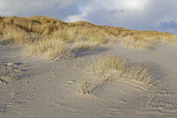 White dune with beach grass at the west beach of Sylt, Schleswig-Holstein, Germany