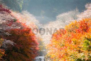 Nagoya, Obara Sakura in autumn