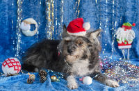 Funny dog in Christmas background