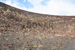 first plants on volcanic soil of Etna mount