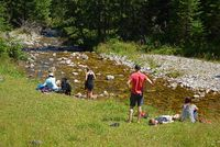 Summer afternoon at the brook in the Chocholowska valley. Western Tatra, Poland.