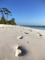 Footprints in wet sand on beach