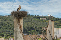 A single stork and a pair of storks in their nests