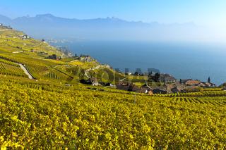 Weinberge im goldgelben Herbstlaub über dem Genfersee, Rivaz, Lavaux, Waadt, Schweiz
