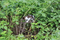 Cute kitten walking in the garden 20557