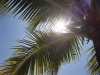 Palm tree over blue summer sky with sun