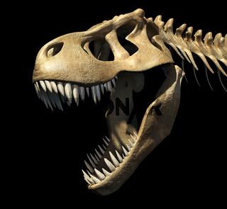 T-Rex skull close-up.