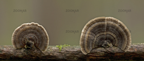 Mushrooms on a branch