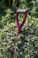 Fork handle overgrown by ivy long forgotten by the gardener.