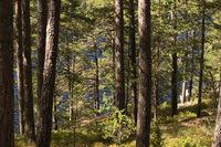 Im Tiveden Nationalpark in Schweden