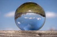 Swamp Landscape in a Glass Ball