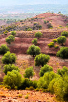 Olive plantation in High Atlas Mountains in Morocco.