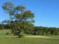 tree, autumn, ash, landscape, swabian alb, germany,