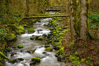 Oregon Deep Forest Footbridge Mossy Rock River Flow