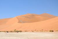 Sand Dune Big Daddy Namib Namibia