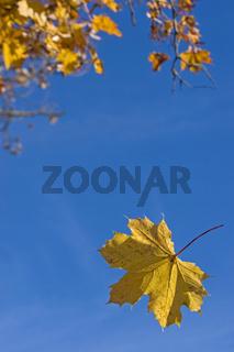 Fallende Herbstblätter / autumn leaves