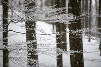Zweige mit Raureif vor unscharfen Bumstämmen
