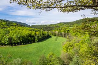 Landschaft mit Wald und Wiese im Thüringer Wald