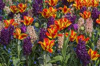 Bunte Frühlingsblumenrabatte