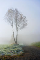 tree with fog