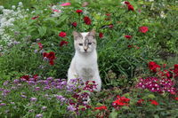 Cat and flowers in the garden 20526