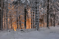 snow-covered winter scenery frosty coldly