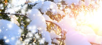 snowy tree branch at sunset