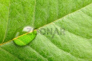 macro photo of a water drop on leaf