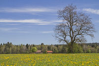 Spring meadow in Upper Bavaria