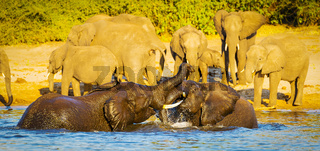 Young Elephants Playing In Water
