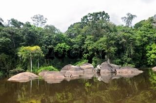 entlang dem Regenwald in Suriname