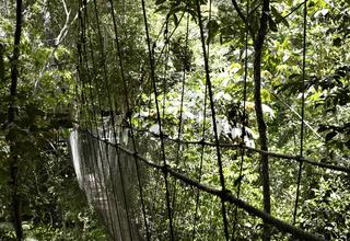 Hängebrücke in Ecoparque de Una, Atlantischer Regenwald, Mata Atlântica, Bahia, Brasilien, Südamerika