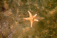 Closeup of starfish in water top view