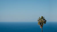 palm tree with ocean and blue sky background