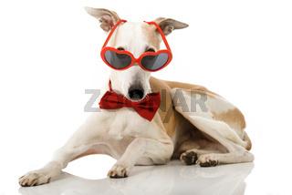 Hund mit Fliege und Brille