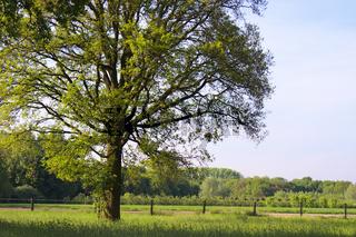 Frühlingshafter Baum