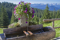 Wooden fountain with summer flowers