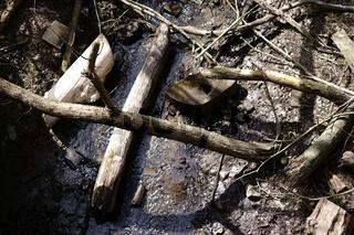 Schwemmholz und abgebrochene Baumstämme