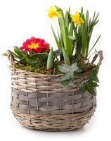 Frühlingshaft bepflanzter Flechtkorn freigestellt